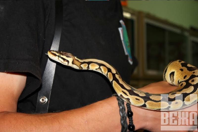 Михайло Королик: «Будь-яка змія боїться людини більше, аніж людина її»