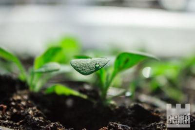 Озеленення міста, або як розквітає Франківськ (ФОТО)