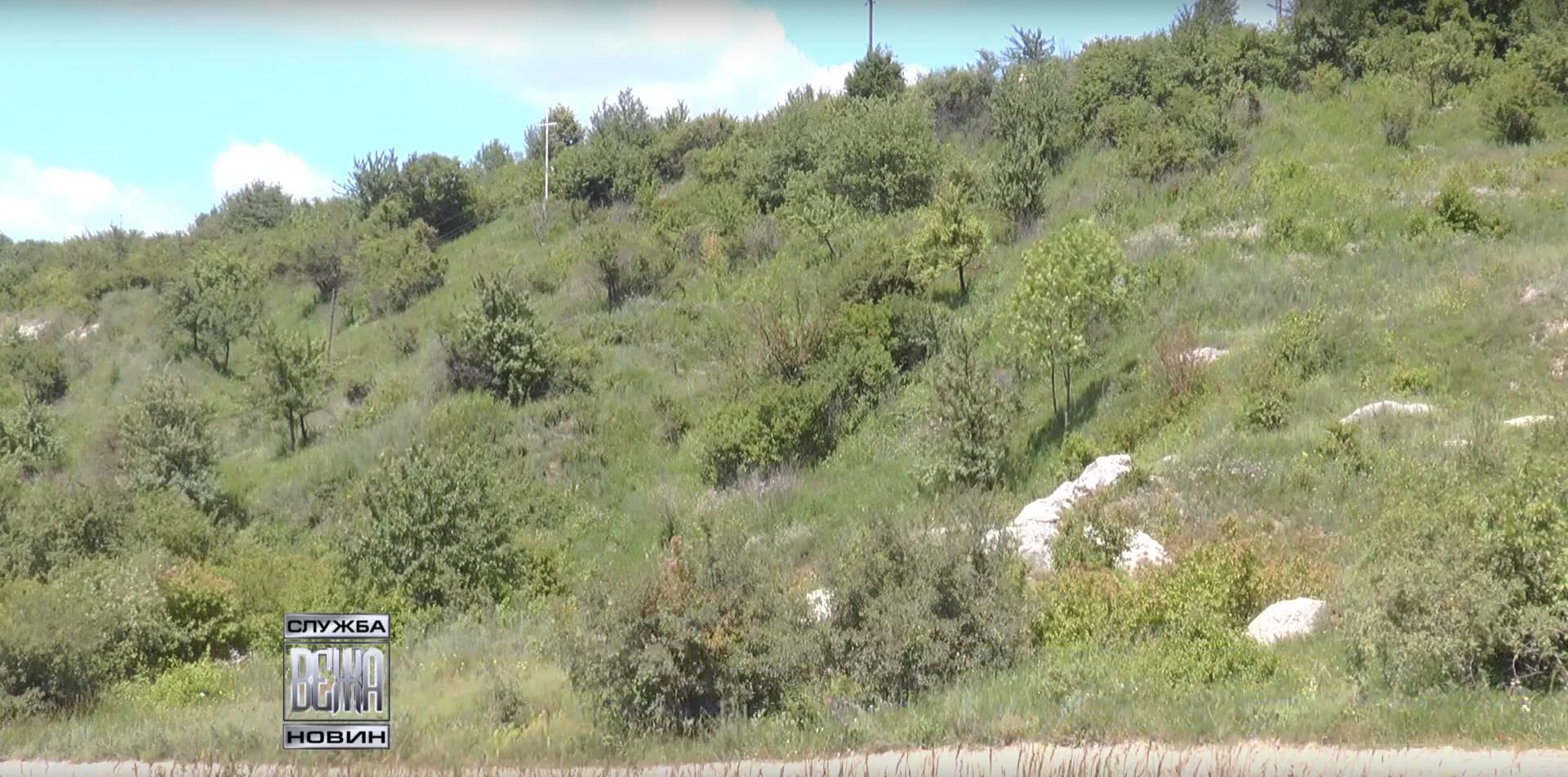 Івано-Франківська мерія облагородить єдиний в місті ліс у с. Вовчинці (ВІДЕО)