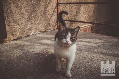 Весняні вуличні коти Франківська (ФОТО)