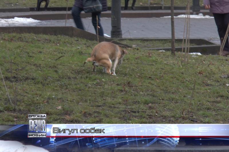 В Івано-Франківську облаштують 5 майданчиків для вигулу собак (ВІДЕО)