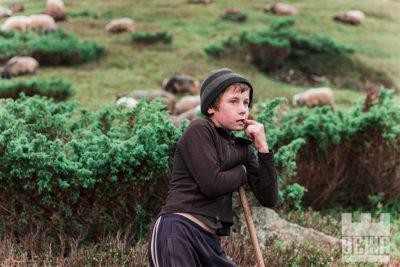 Життя на полонині: вівці, коні, пастухи (ФОТО)