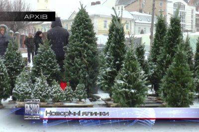 В Івано-Франківську визначили офіційні  місця продажу новорічних ялинок (ВІДЕО)