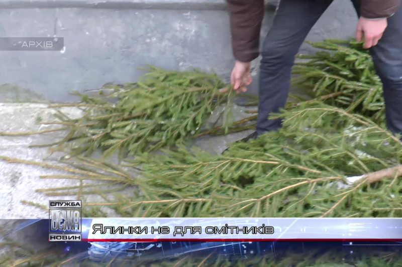В Івано-Франківську діє пункт прийому новорічних  ялинок (ВІДЕО)