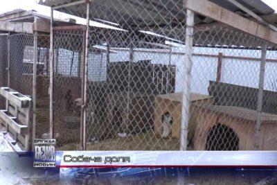 """Волонтери """"Дому Сірка"""" проведуть Благодійний вечір на підтримку безпритульних тварин (ВІДЕО)"""