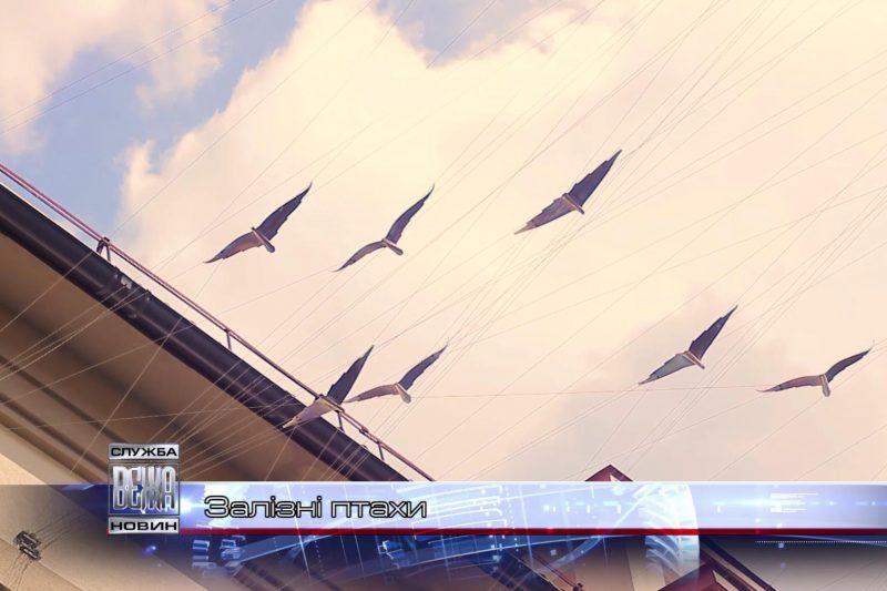 """Півтора десятка кованих птахів """"злетіли"""" над одним із івано-франківських провулків (ВІДЕО)"""