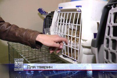 В Івано-Франківську лікують безпритульних тварин (ВІДЕО)