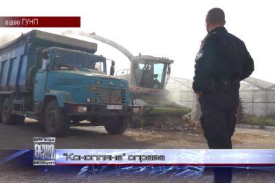 На Косівщині поліція знищила рекордну плантацію коноплі (ВІДЕО)