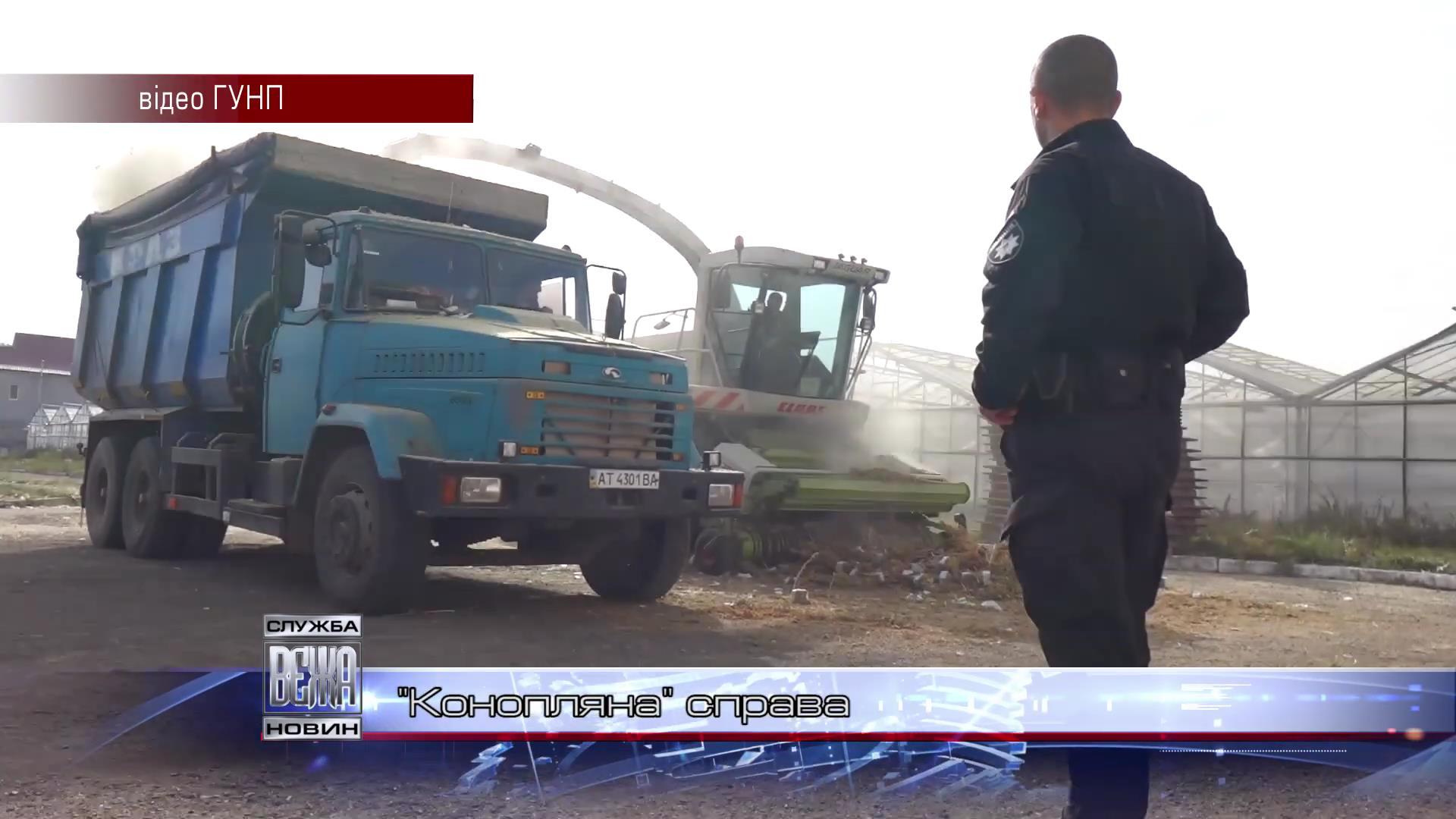 На Косівщині поліція знищила рекордну плантацію коноплі[19-39-48]