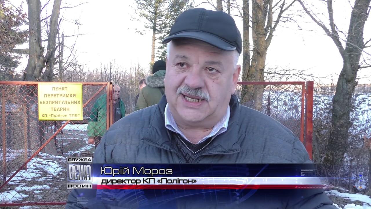 В Івано-Франківську відкрили перший комунальний пункт перетримки безпритульних тварин  (ВІДЕО)