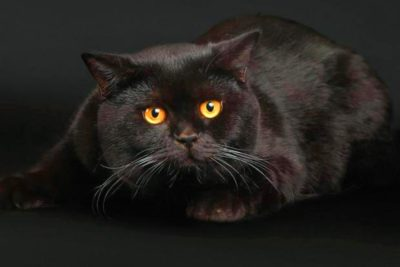 Не тільки лікують: те, що важливо знати про котів